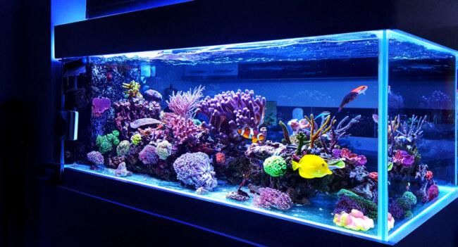 Do fish need light at night?