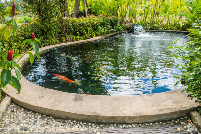 how long can koi fish live without a pump?