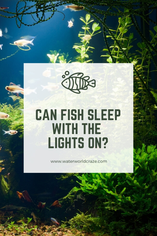 Can fish sleep with the lights on?