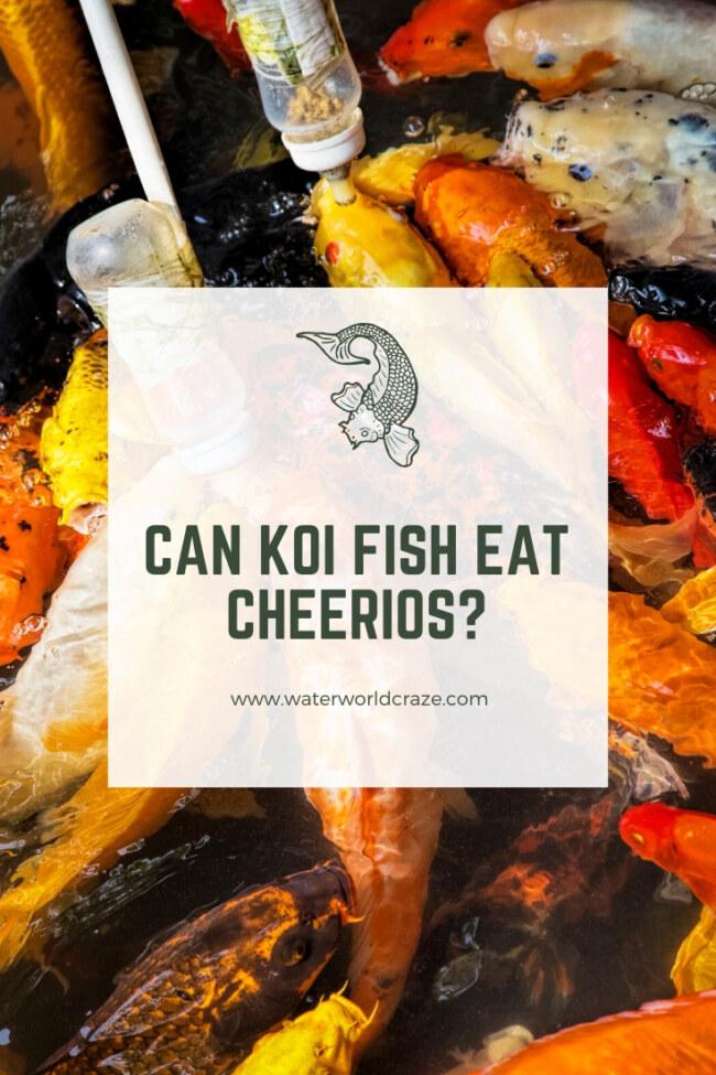 Can koi fish eat cheerios?