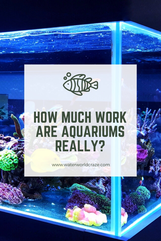 Are aquariums a lot of work?