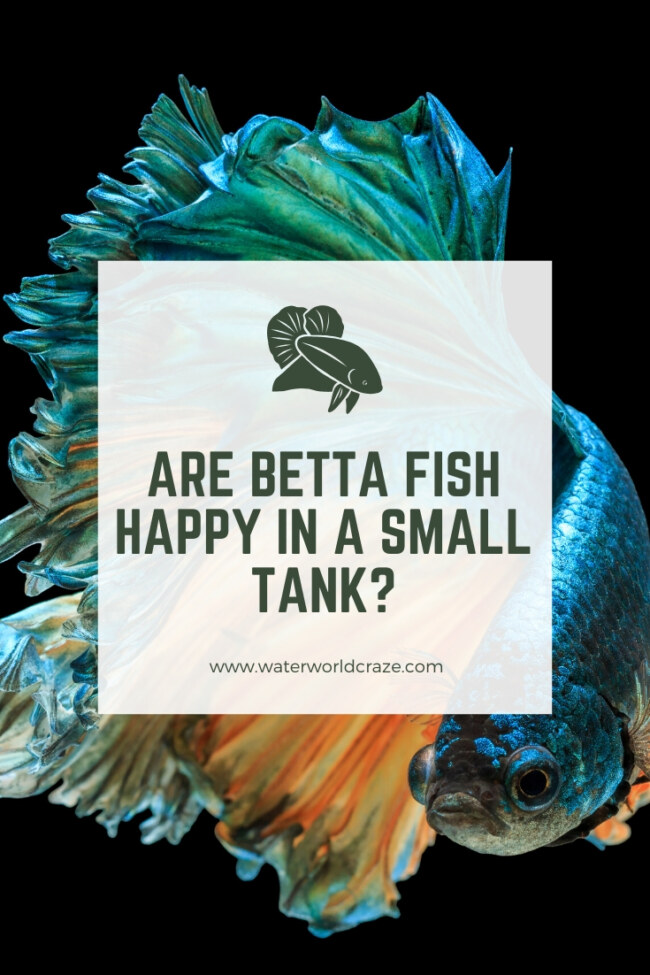 Are betta fish happy in a small tank?