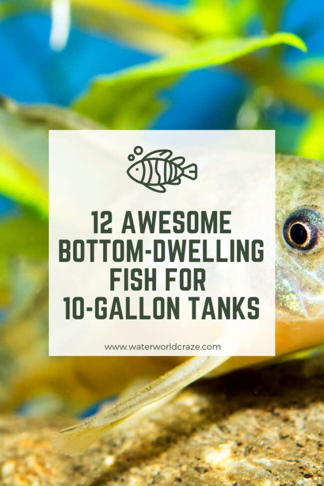What bottom-dwelling fish can I have in a 10-gallon tank?