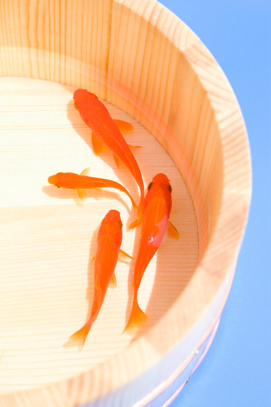human foods that can kill goldfish