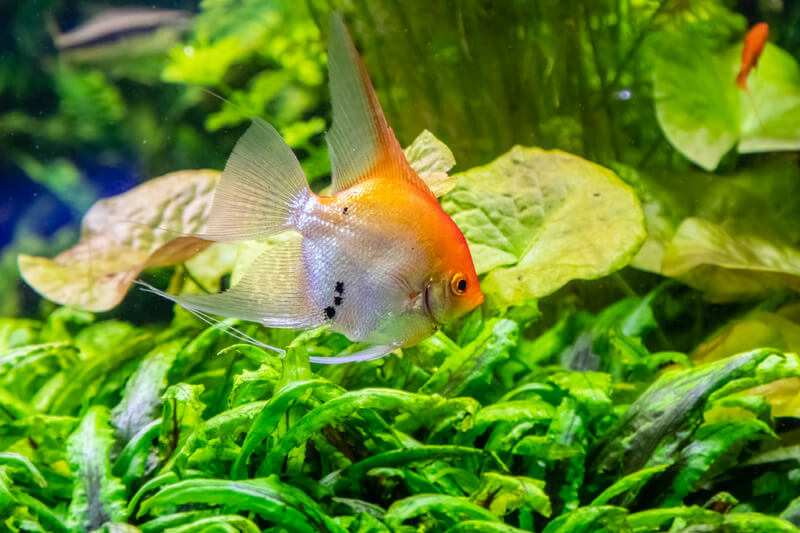 can fish live without the filter?