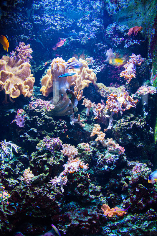 how much work are aquariums