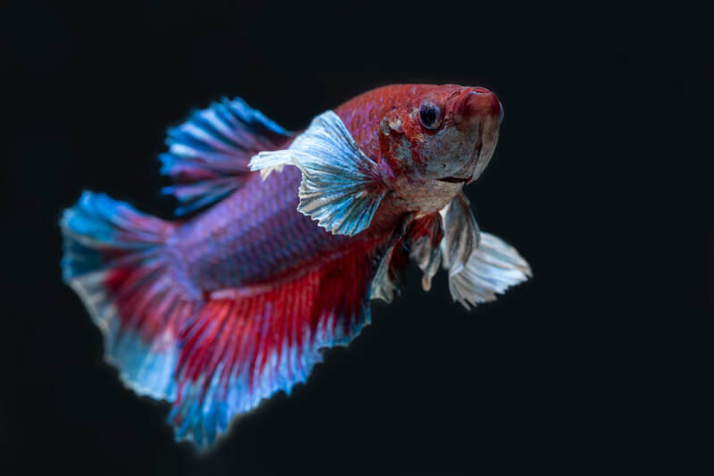 are betta fish light sensitive?