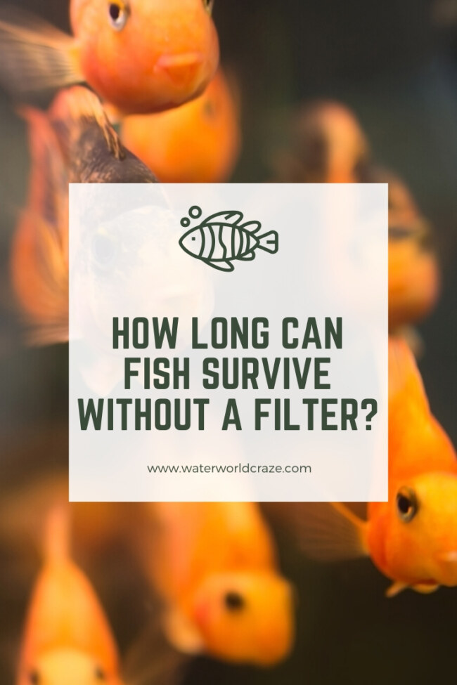 How long can fish live without a filter?
