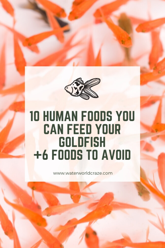 What human foods can goldfish eat?