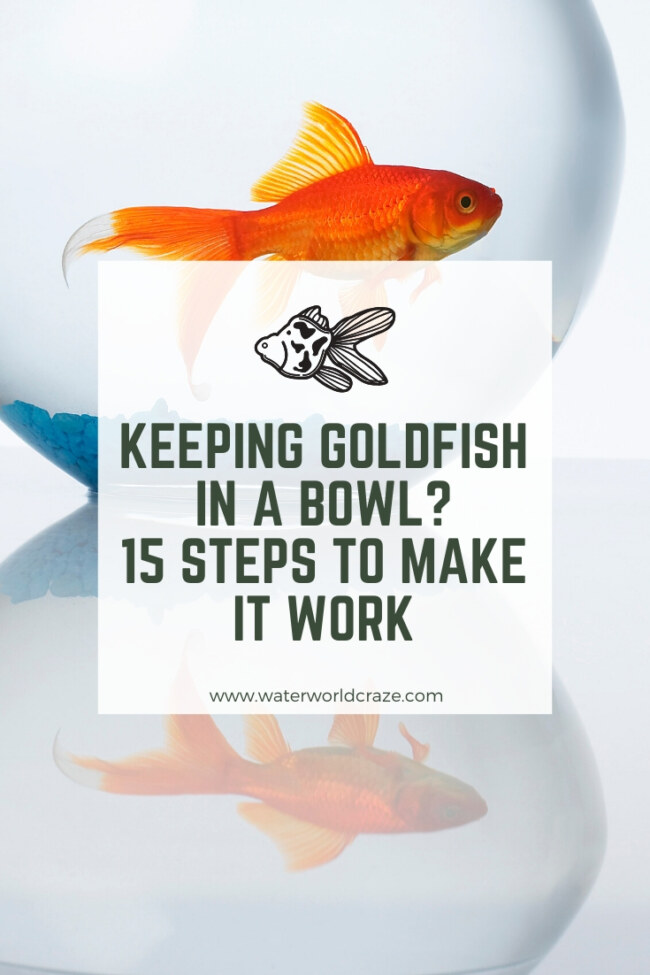 Can I keep a goldfish in a bowl?