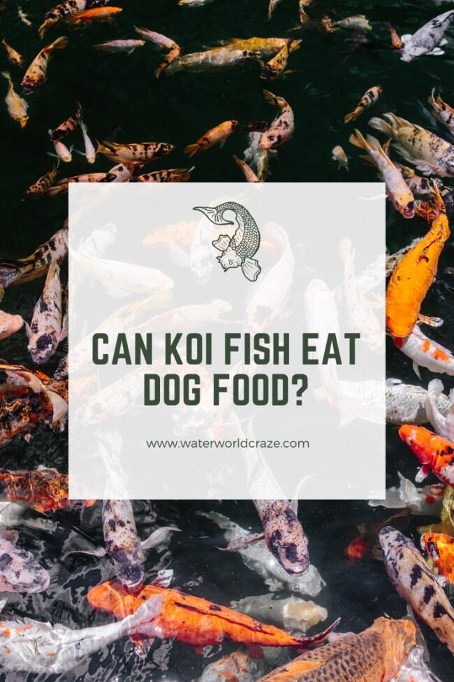 Can Koi Fish Eat Dog Food?