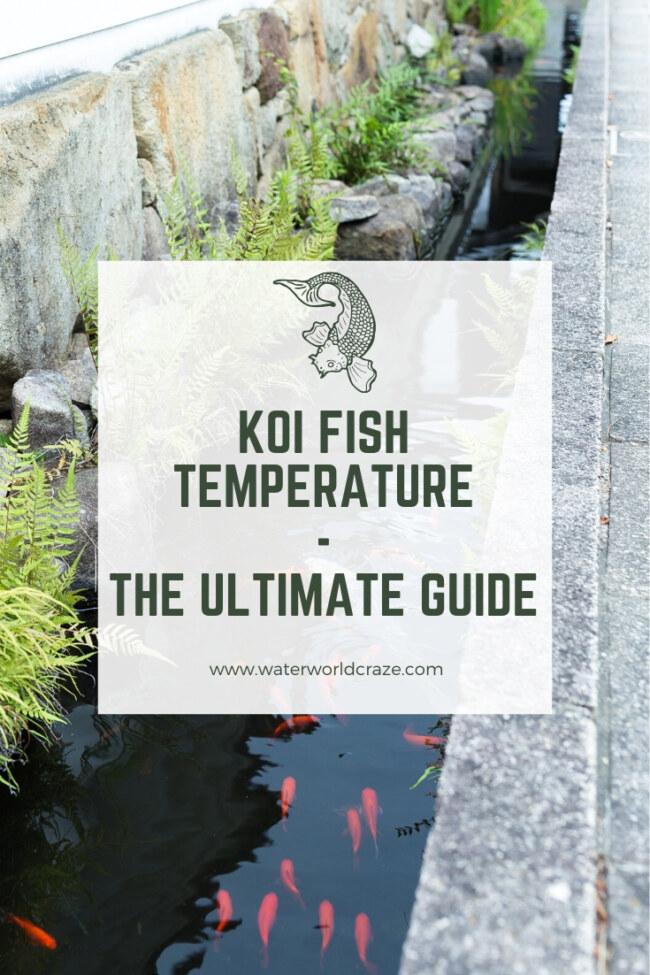 What is the optimal koi fish temperature range?