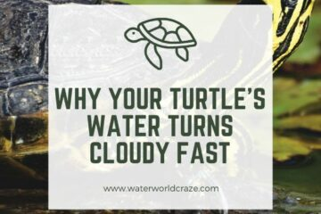 why does my turtle water get cloudy so fast