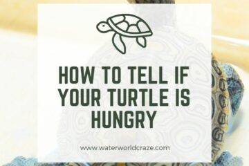 how to tell if my turtle is hungry