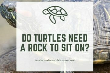 Do turtles need a rock to sit on?