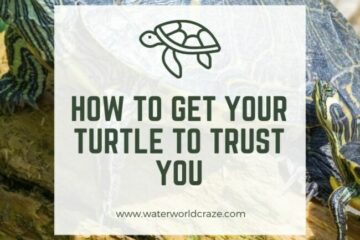 how do I get my turtle to trust me